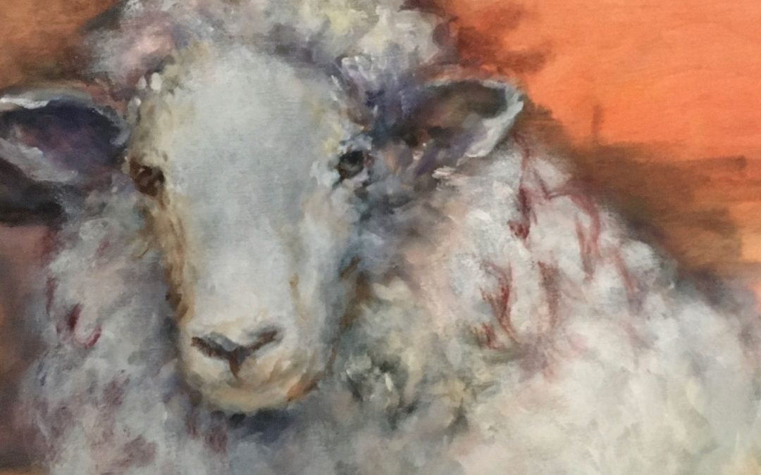 Portrait of a Sheep